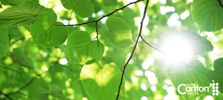 Where does the air we breath come from?